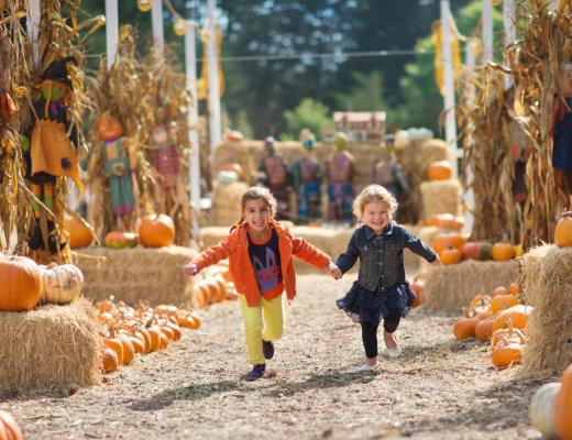 Colorado Fall, Pumpkin and Harvest Festivals 2018 | The Denver Ear