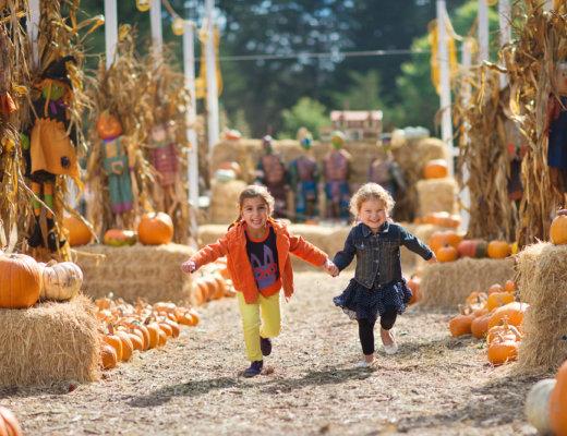 Colorado Fall, Pumpkin and Harvest Festivals 2018   The Denver Ear