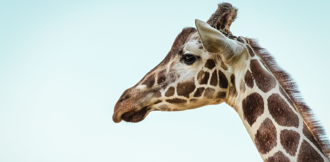 2019 Denver Free Days | The Denver Zoo