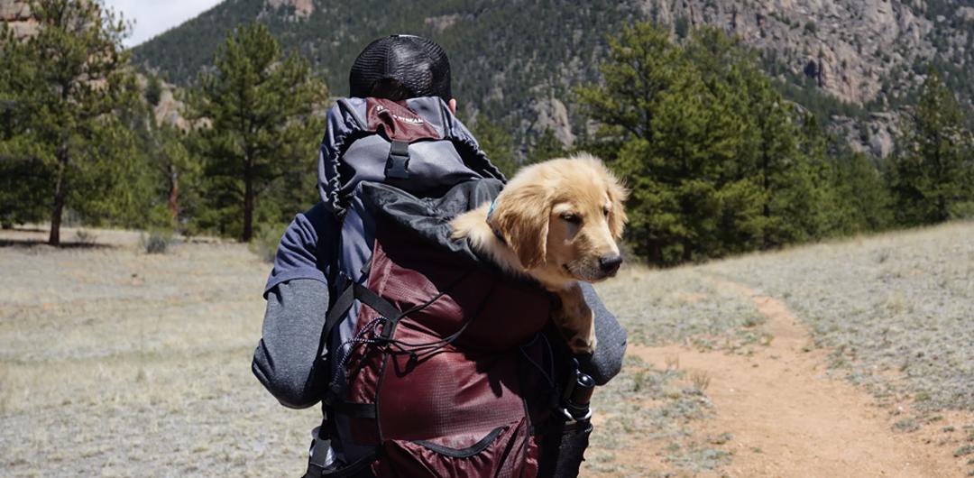Dog-Friendly Hikes Near Denver