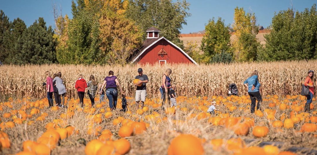 The Ultimate Fall Bucket List for Denver | Things To Do in Denver in the  Fall