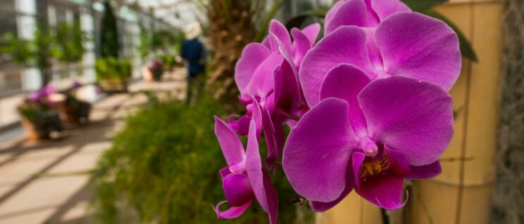 Denver Botanic Gardens | Things to do in Denver