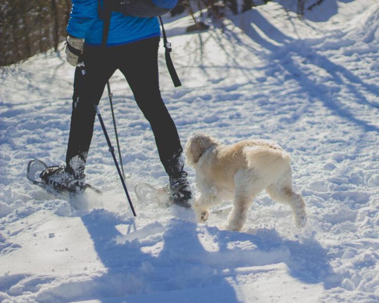 Denver Snowshoeing