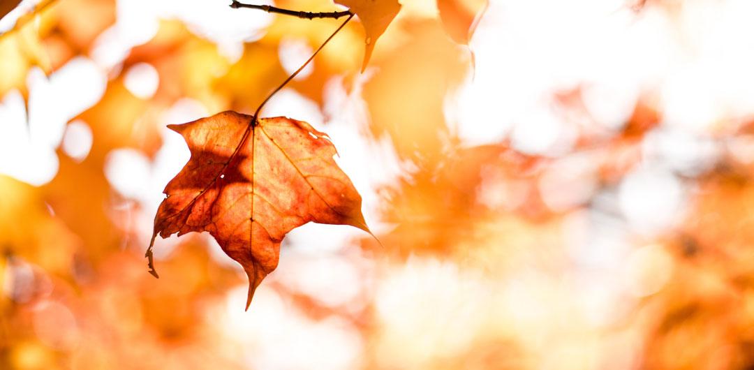 Denver Fall