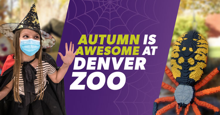 Denver When Celebrating Halloween 2020 A Complete Guide to Celebrating Halloween 2020 in Denver | The